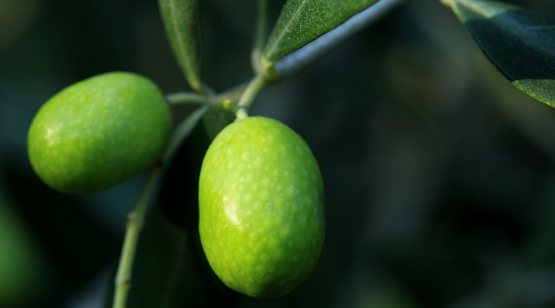 Olive Oil Contest 2018 - Olio Garda Dop