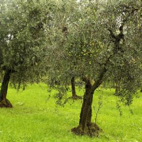 oliveto garda